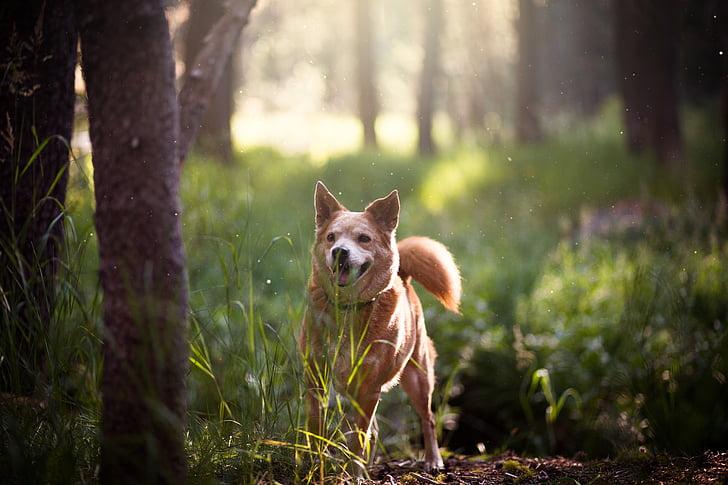short-coated brown dog in forest