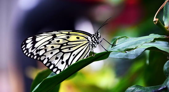 paper kit butterfly perching on green leaf in close-up photography