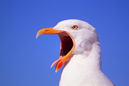 photography of white bird during daytime