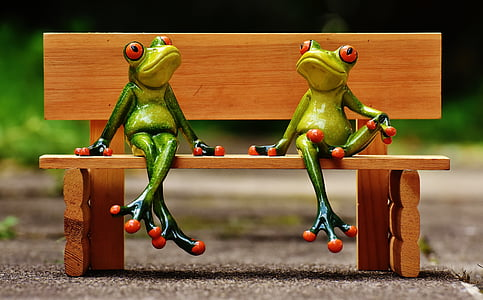 two frogs sitting on wooden bench