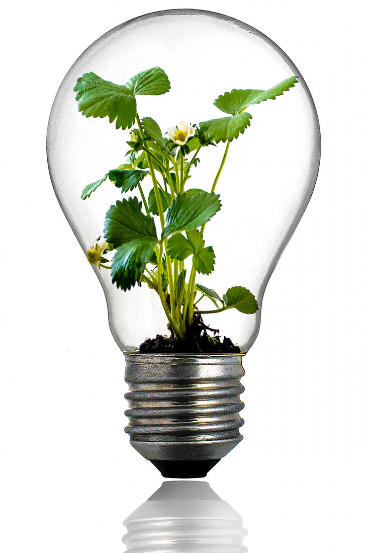 clear glass bulb with green plant