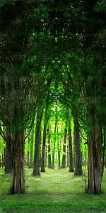 green tree pathway