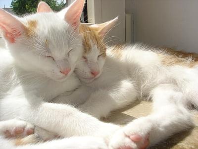 closeup photo of two orange tabby cats
