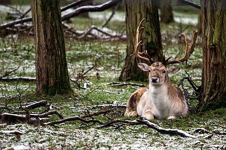 brown deer on ground near tree at daytime
