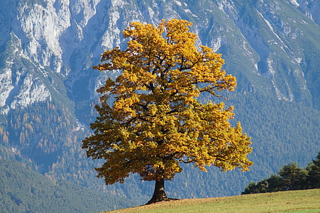 yellow leafed tree in front of mountains during daytime