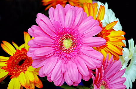 pink and orange petaled flower