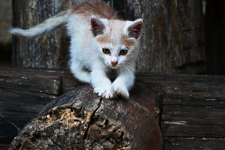 orange tabby cat on wood