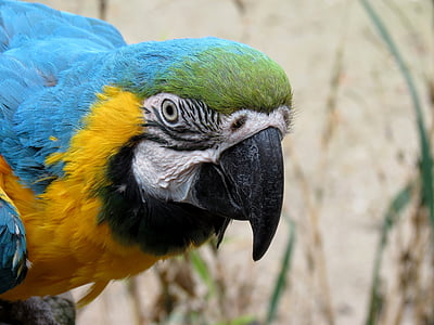 selective focus photo of blue-throated macaw