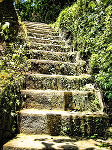stairs surrounded by green plants photography during daytimwe