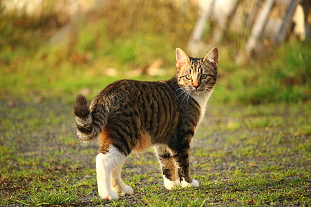 photo of brown tabby cat on grass