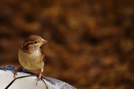 shallow focus photography of a bird