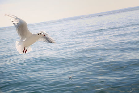 white flying bird on top of body on water
