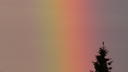 tree under rainbow