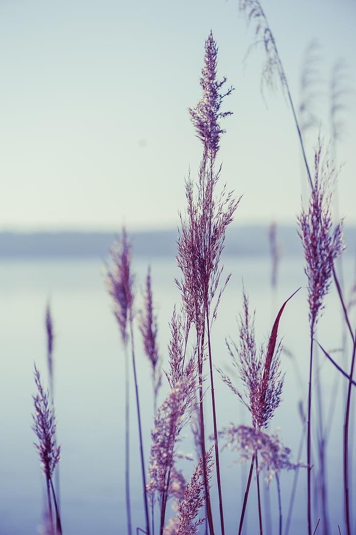 purple grass in closeup photo