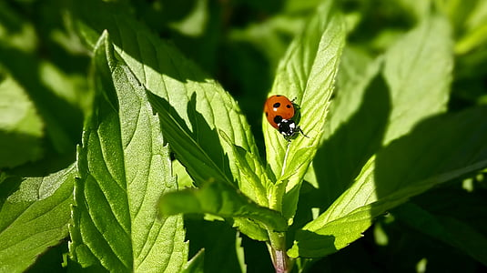 red ladybug perched on green leaf plant