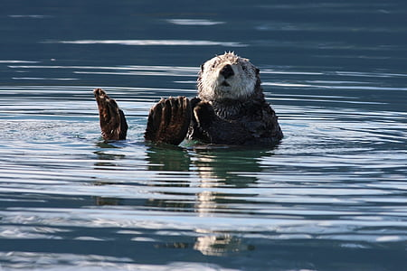 photography of black and white sea lion on body of water