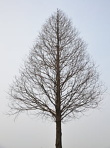 standing bare tree photo