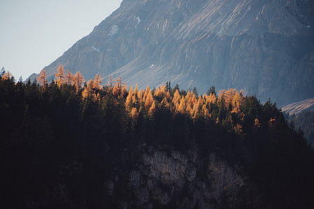 trees on top of mountain