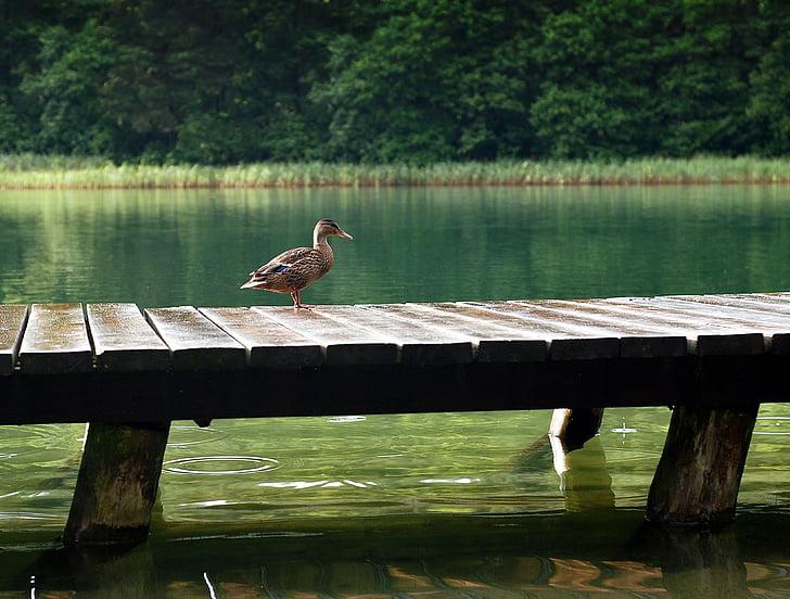 brown mallard duck on top of bridge during daytime
