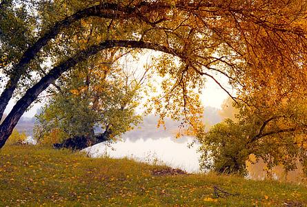 brown leaf tree near body of water