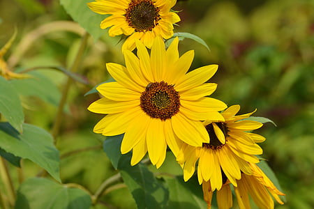 shallow depth of field photography of yellow petaled flowers