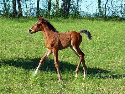 brown horse on grass field