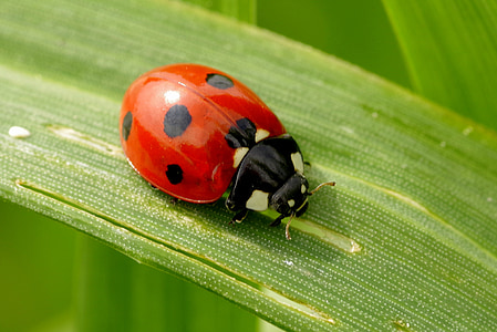 closeup photography of ladybird on green leaf