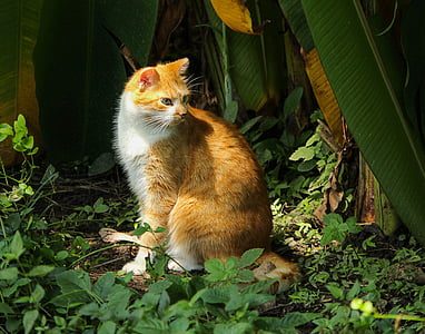 orange tabby cat surrounded by green leafed plant