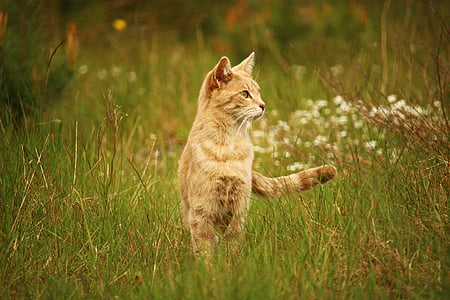 short-fur brown cat on the field at daytime photography