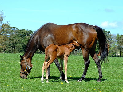 photograph of brown horse with pony