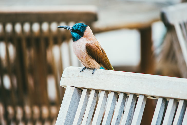 brown and blue bird perched on white wooden fence