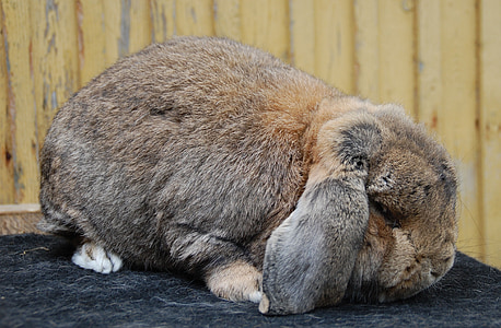 brown and gray rabbit on gray textile
