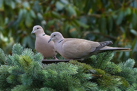 two gray birds on branch