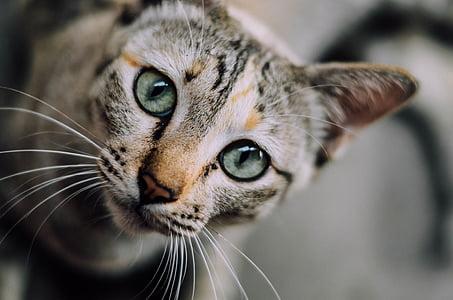 closeup photo of brown cat