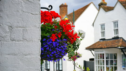 assorted flowers hanging on the wall