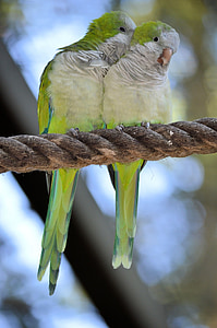 two green-and-white birds perched on brown rope