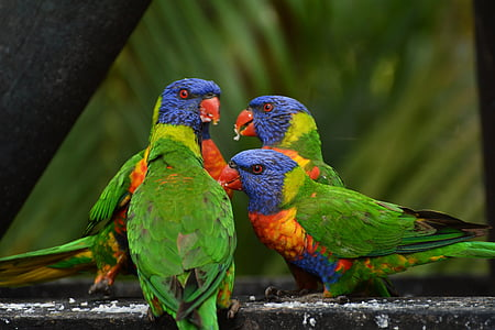 focus photography of four rainbow lorikeets perching on black concrete pavement