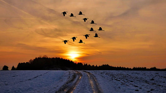 flock of birds in sunset