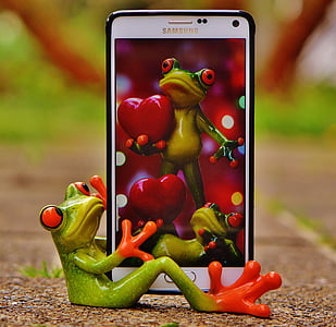 red-eyed frog smartphone wallpaper