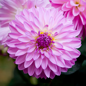 close photo of pink petaled flower