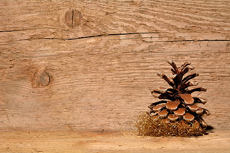 brown plant beside brown wooden wall