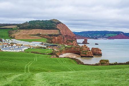 green grass near sea
