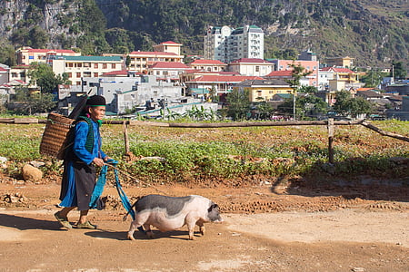 woman walking together with pig during daytime