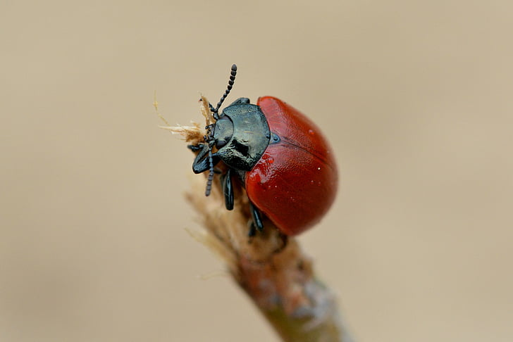 red and black bug on twig