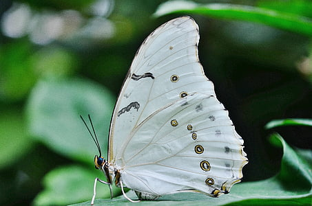 selective focus photography of white and brown spotted butterfly perched on green leaf