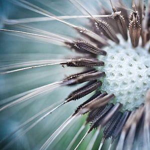 closeup photography of dandelion flower ]