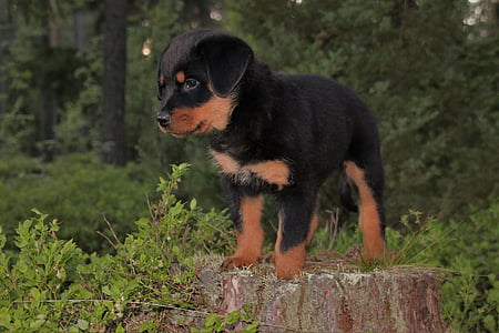 short-coated black and tan puppy near green leaf trees