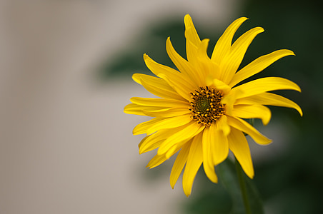 selective focus photography of yellow flower