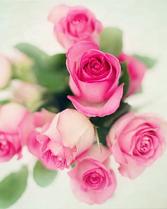 depth of field photography of bouquet of pink roses