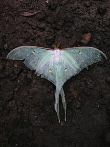 white and green moth on brown soil